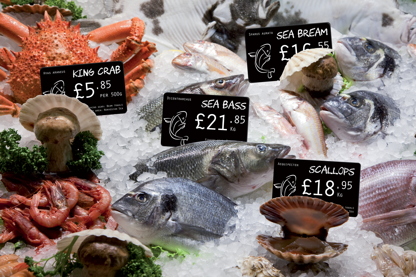 Price tags for fishmongers in situ